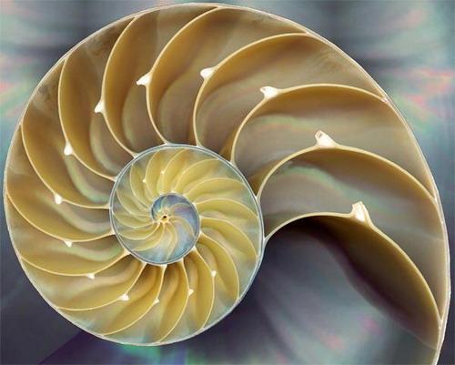 Immagine riferita a: La sezione aurea.Il linguaggio matematico della bellezza